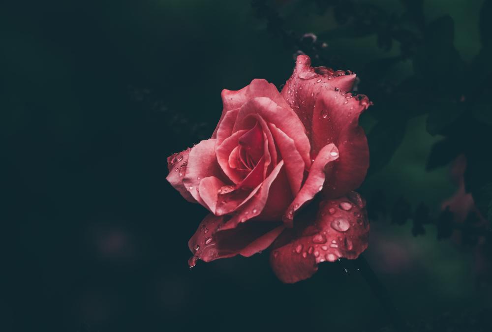 Closeup Flower Photograph