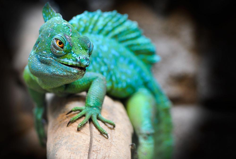 Closeup Photo of a Reptile
